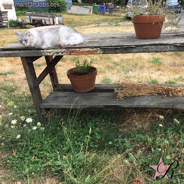 #Cat lounging in the #spring fresh air. #animalsonjobsites