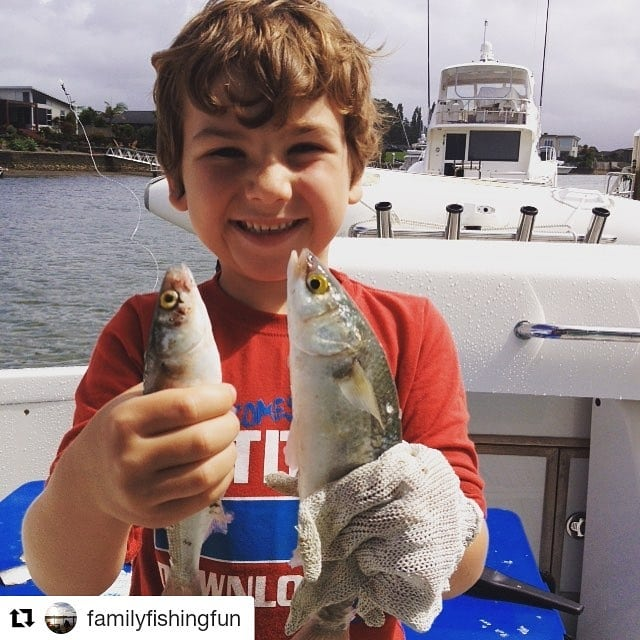 Fishing in the #waterways is always fun!  #Repost @familyfishingfun (@get_repost) ・・・ The yellow eye mullet man #rayglassboats  #whitiangawaterways #kidslovefishing #familyfunfishing