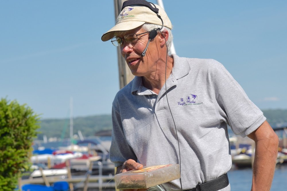 Nationally recognised expert in Purple Martins, Jack Gulvin cares for the Institutions many nests