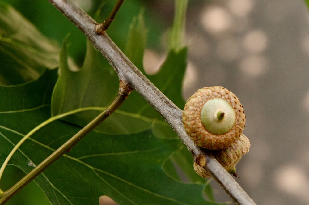 Visit the Arboretum - a living tree encyclopedia