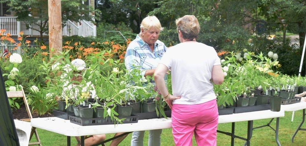 Master Gardener Chris discusses native plants