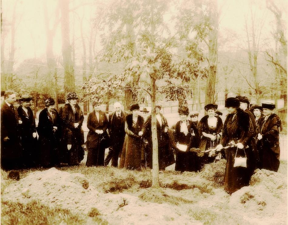 Arboretum. 1915