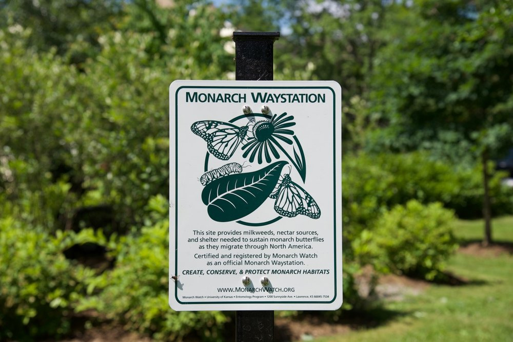 Enjoy the colorful, sustainable, eco-wise monarch habitats on grounds