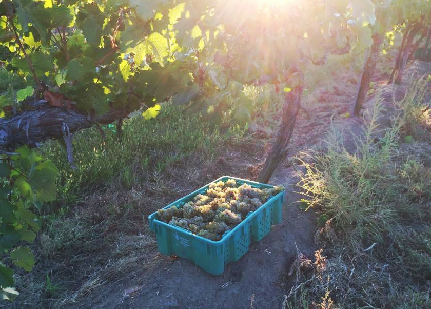 Hand Picked Riesling