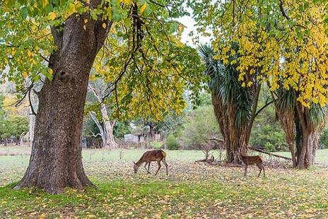 Deer friends!