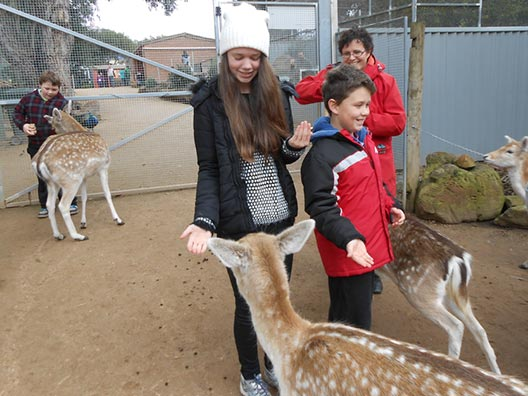 Fun with deer at Halls Gap Zoo.