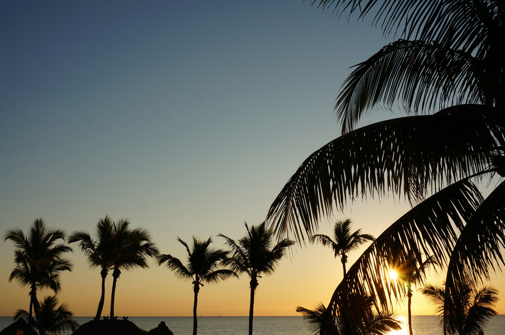 Sunrise and palm trees