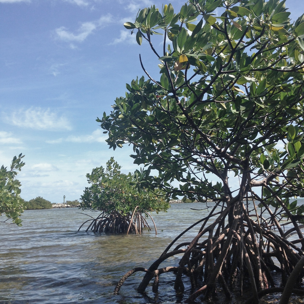 View from the mangroves