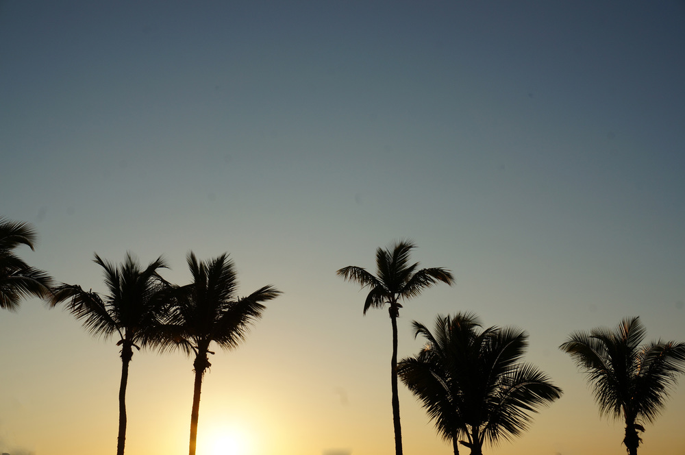 Sunrise over the palms
