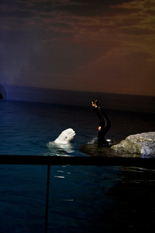 CS Shedd Aquarium BLU Gala Chicago Event Photographer-0005.jpg