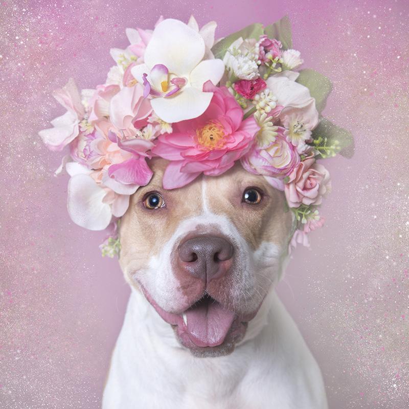 blossomL.jpg