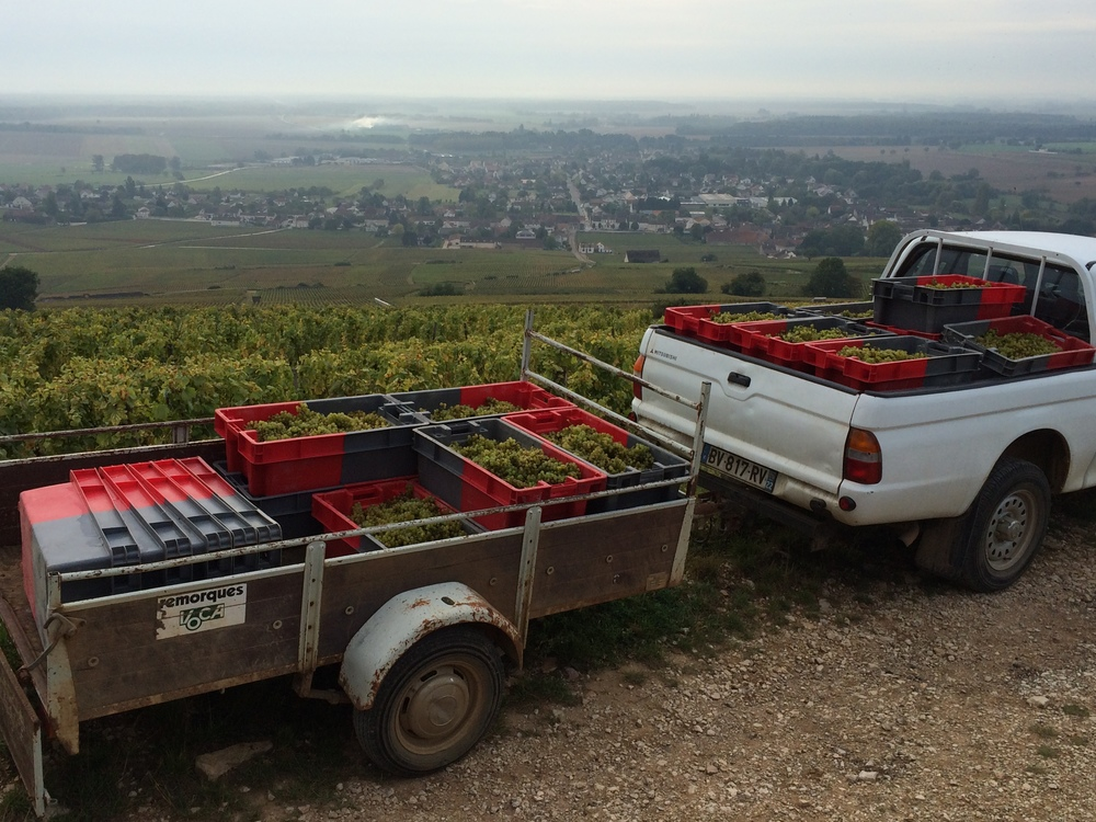 Hard to believe, but these crates represent the Domaine's entire parcel of 2014 Corton Blanc
