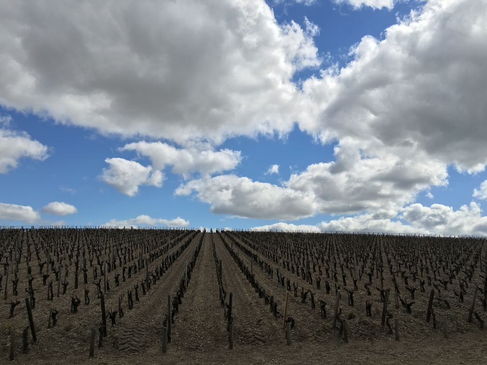 Moonscape vineyard at Paulliac. Photo courtesy of Devon Magee.