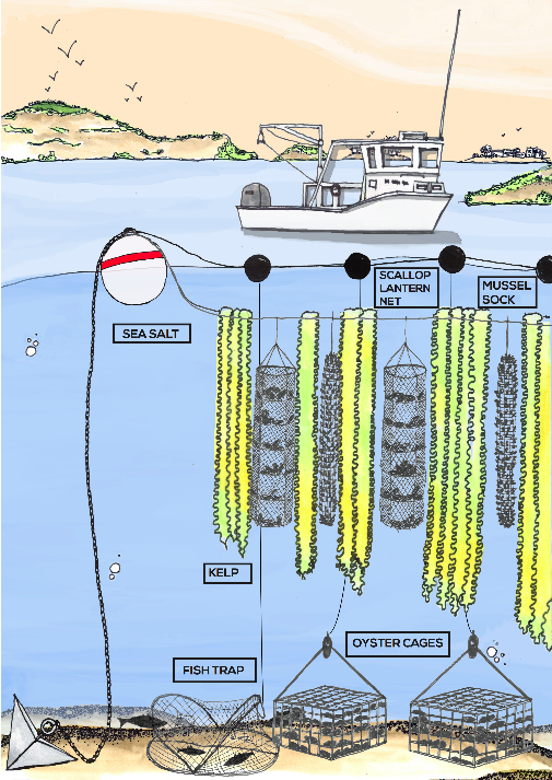 Design of a 3D ocean farming system. Photo courtesy of Green Wave.