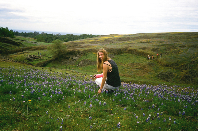 Table Mountain Lupine Field