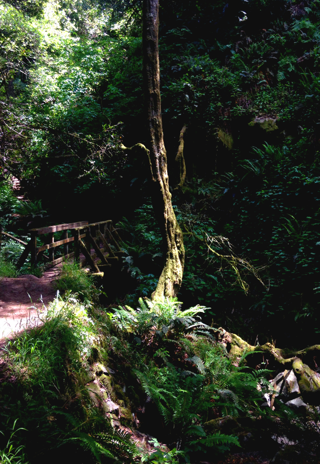 Steep Ravine Trail Wooden Bridge Mt Tam State Park California