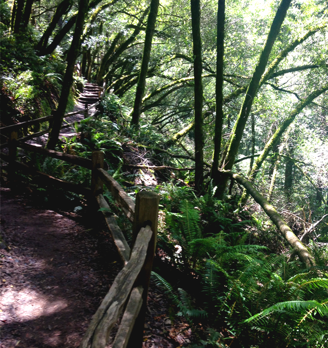 Mt Tam Trail Run Switchback