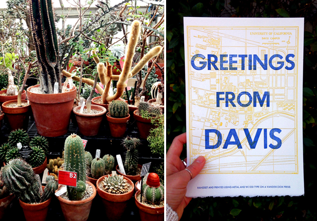Cacti in a UC Davis greenhouse | Letterpress print available for purchase on Etsy atwww.etsy.com/shop/GirlsGoneRad