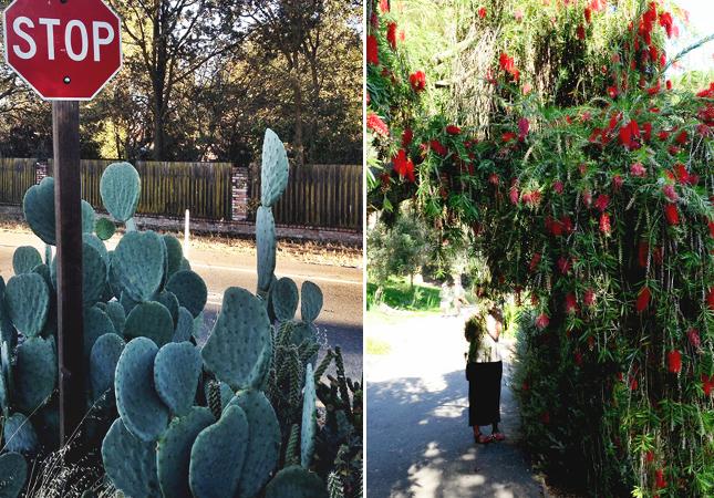 West Davis Cacti Stop Sign and UC Davis Arboretum