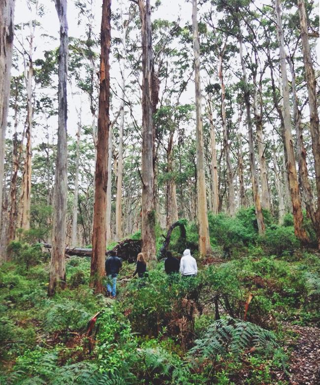 Karri Forest Walk Margaret River Roadtrip Western Australia