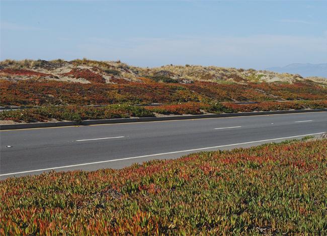 Great Highway Ocean Beach San Francisco