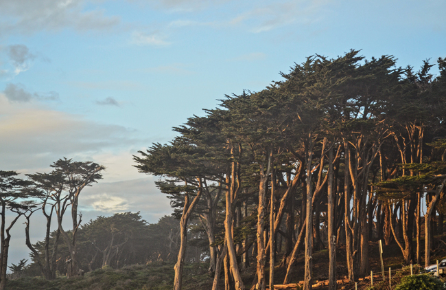 Lands End Trail, San Francisco