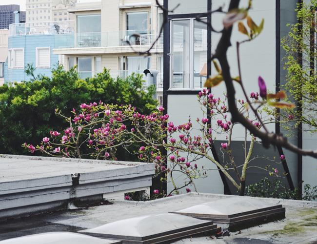 Spring in SF