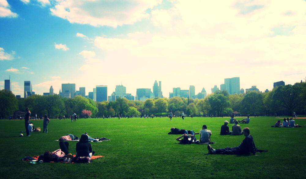 lawn1.jpg