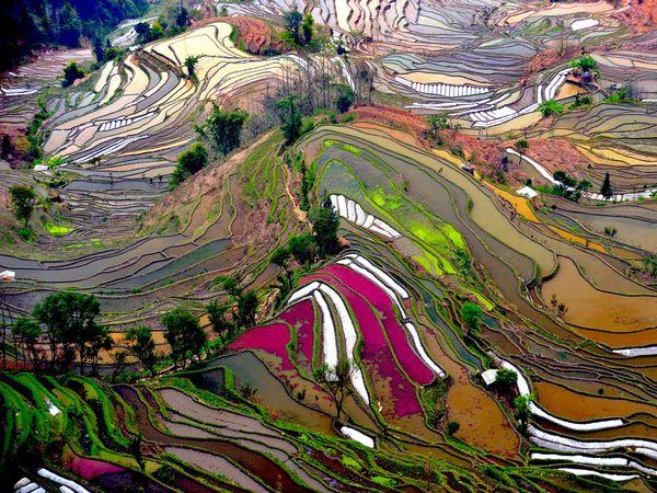 Rice Terraces, Yunan Province (NG)
