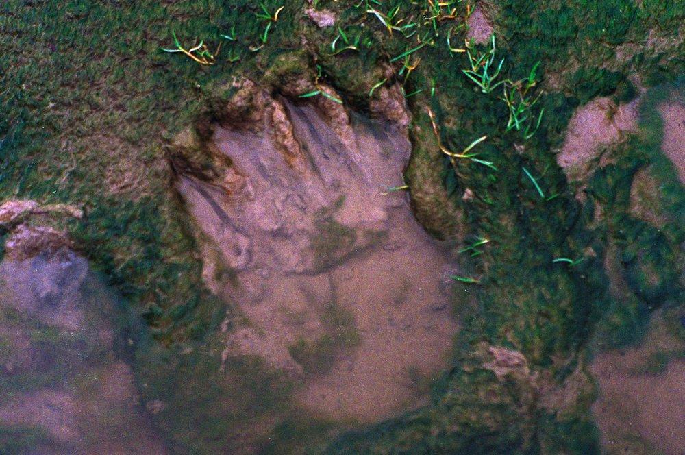 bear track 2017