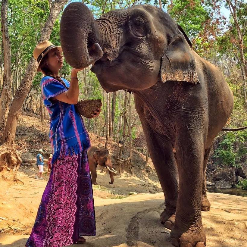 Elephants-Chiang-Mai-Thailand