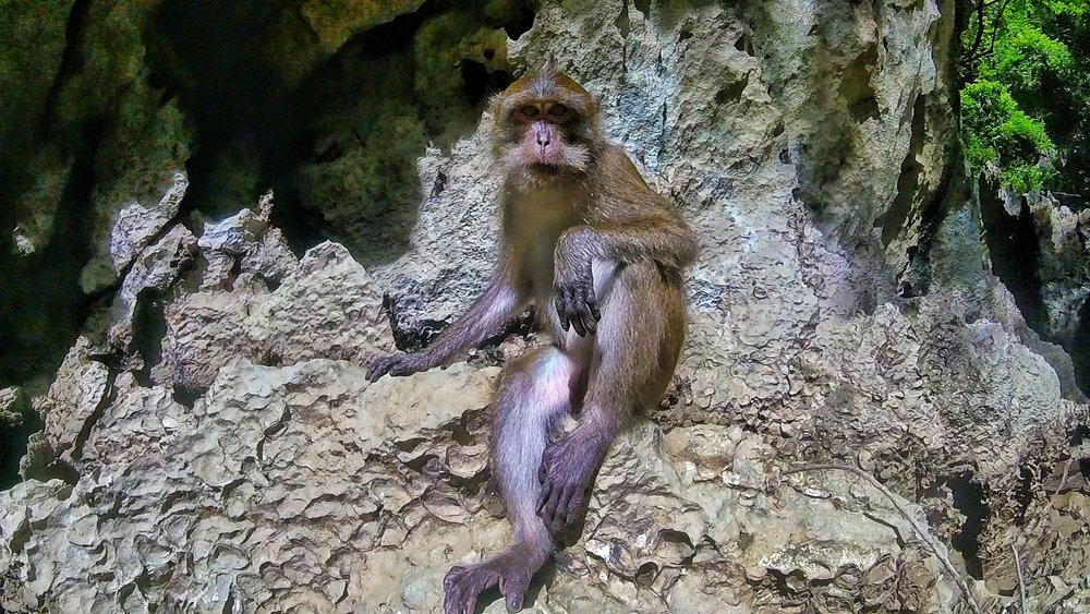 Monkey Phuket Hong Lagoon Tour