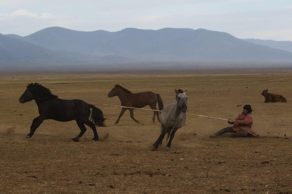 guide-to-mongolia-2