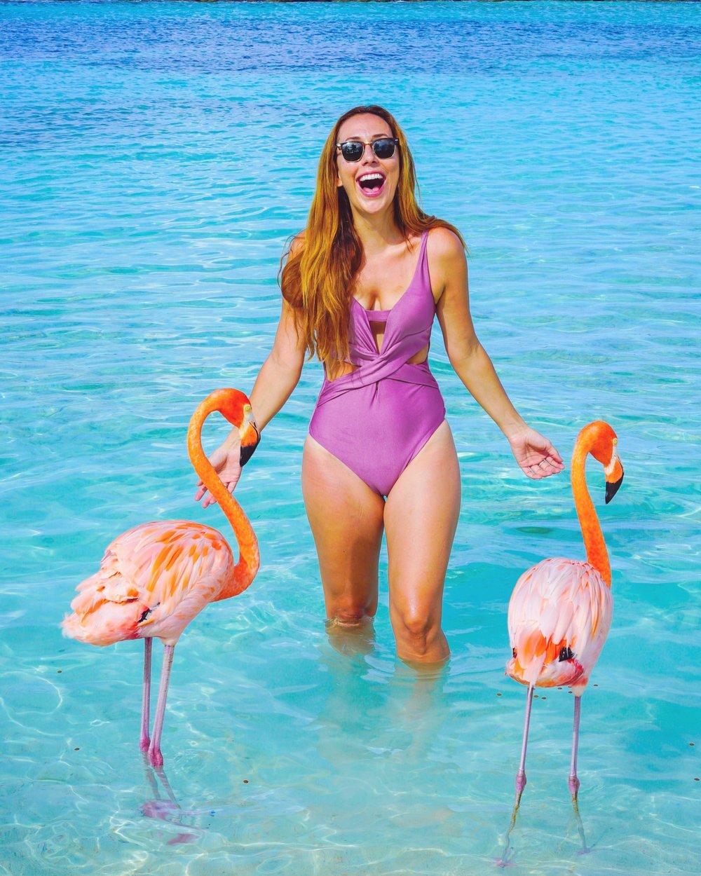 where to see flamingos in aruba