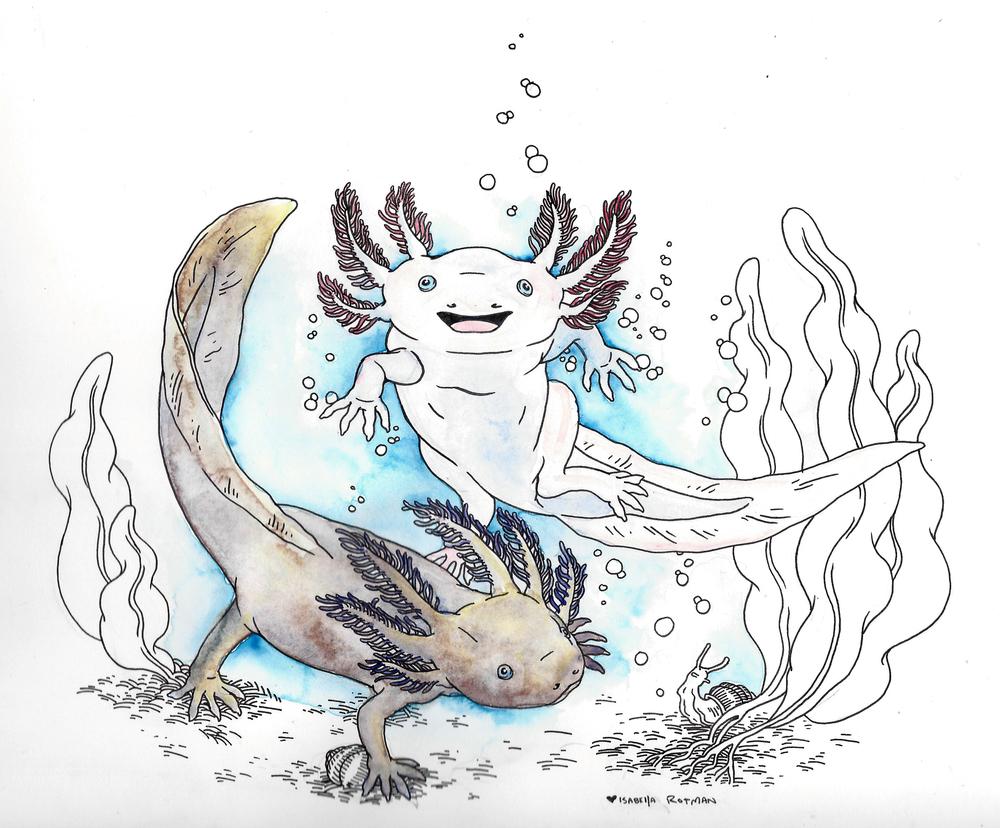 axolotles.jpg