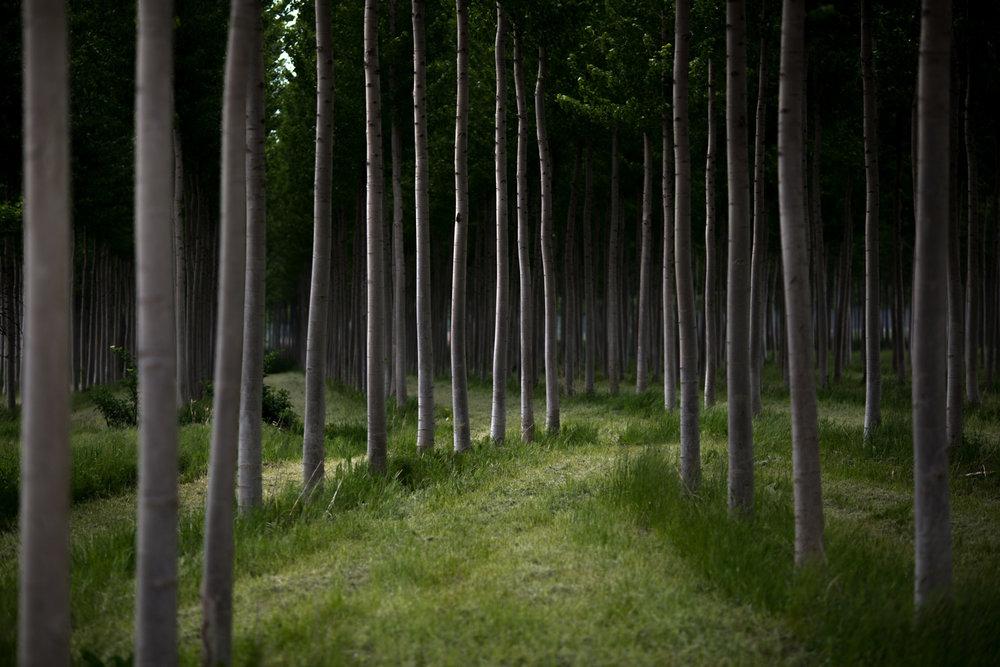 Nature_3.jpg