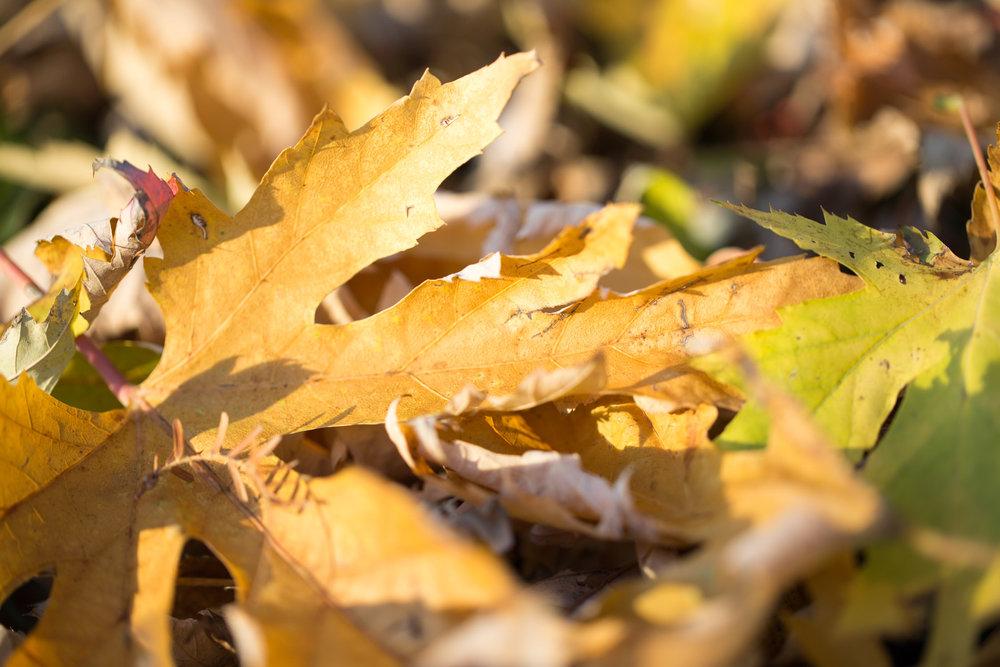 Nature_8.jpg