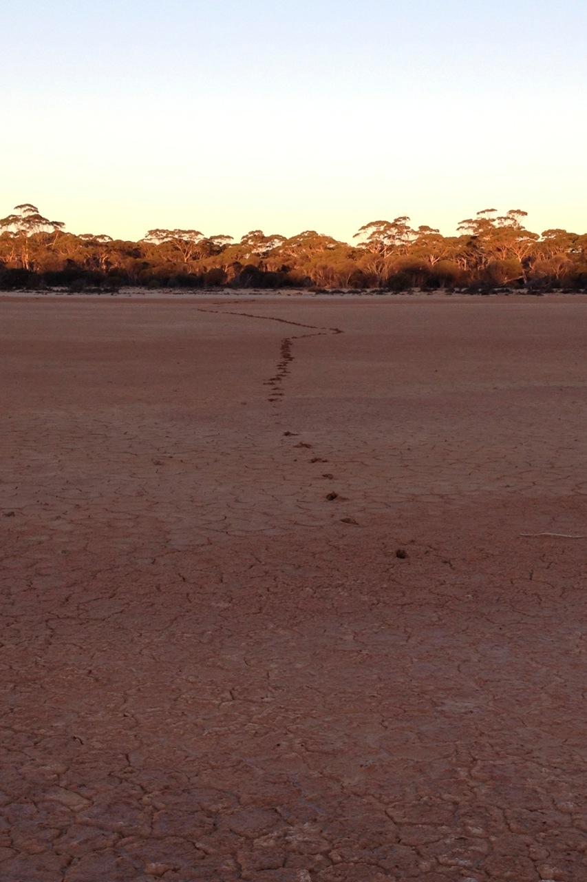 saltLakeEmufootprints.jpg