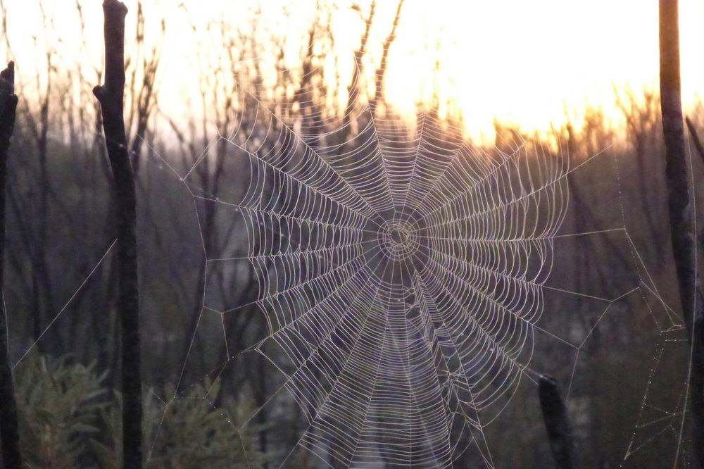 cobweb in frost.jpg