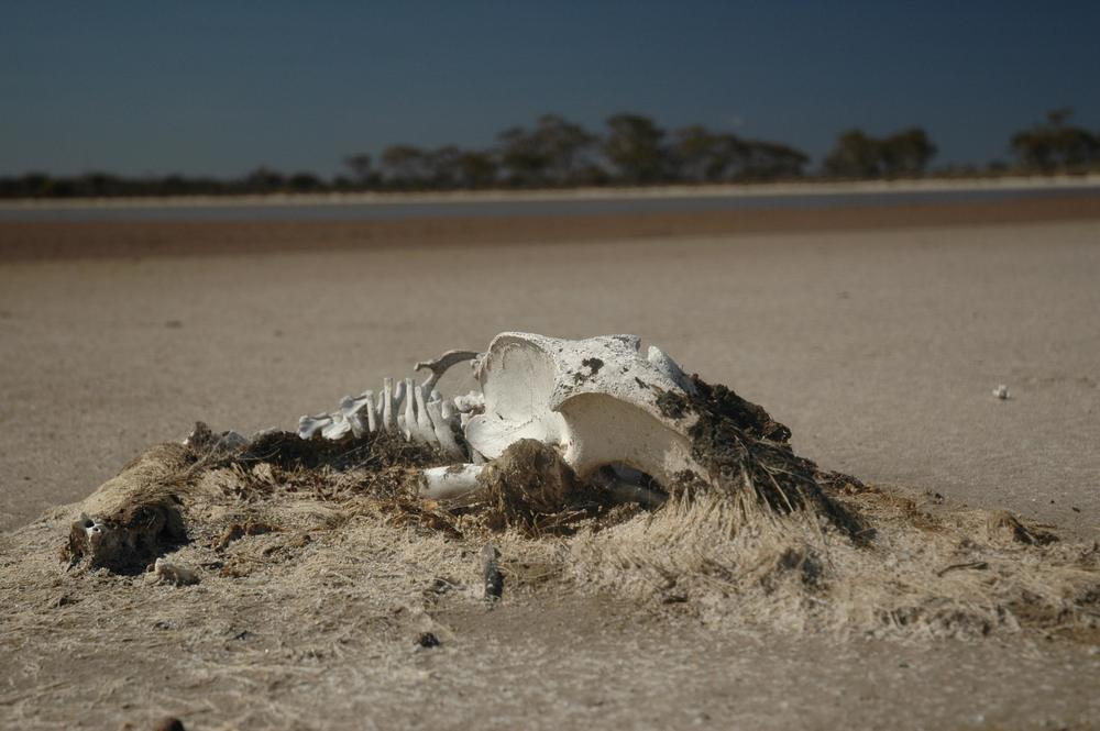 dead emu1.jpg