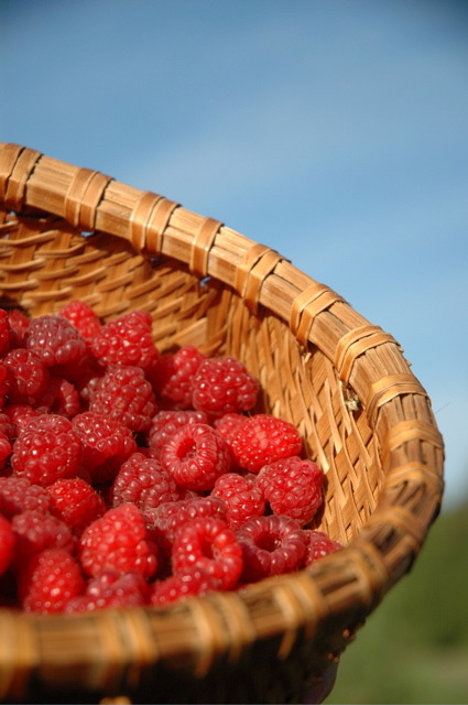 raspberrys in basket.jpg