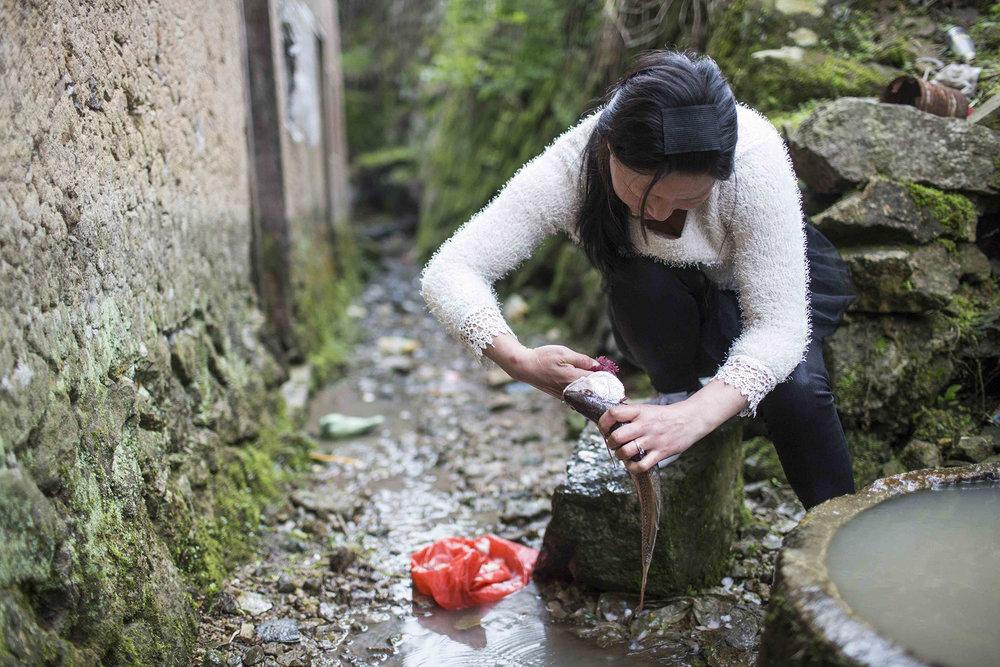 Chunxia Zhu cleans fish that she will be cooking for supper.