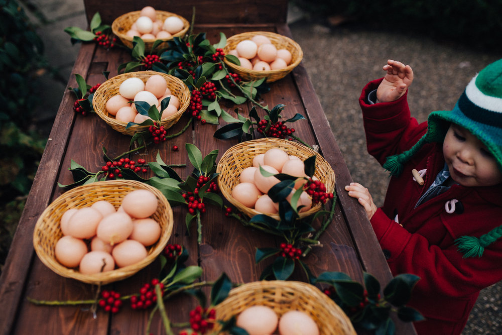 Boy counting egg baskets at Chartwell House - children photography