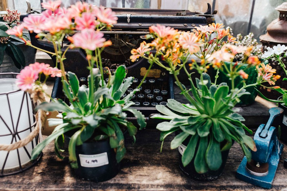 Flowers and typewriter at Alexandra Nurseries, Penge, South East London