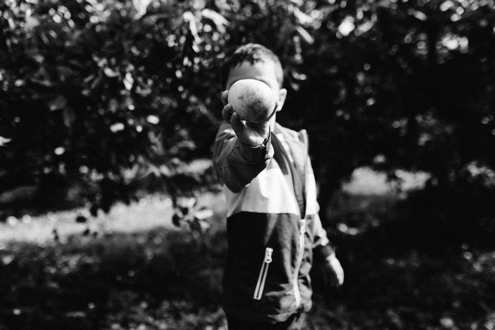 Young child showing an apple hiding his face during a family activity in a pick-your-own farm