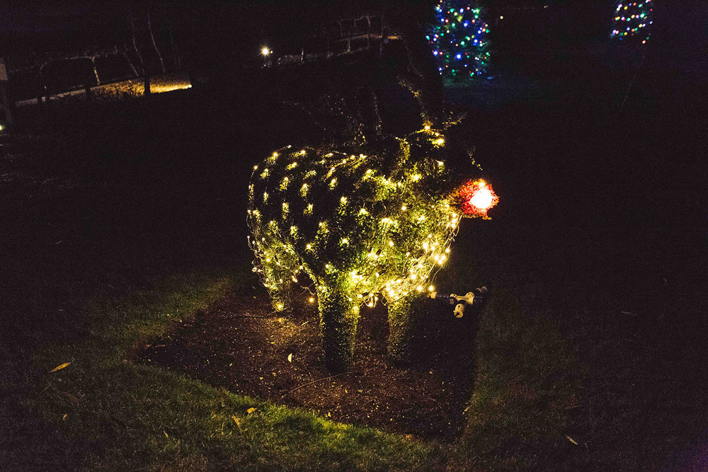 Illuminated reindeer at Hever Castle