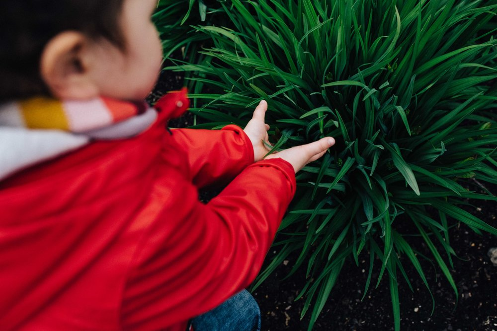 Boy touching plant