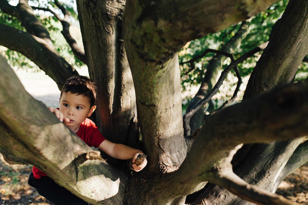 Boy climbing tree during family photography session in Beckenham Place Park
