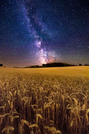 fields of gold whitwell night day landscape photography by