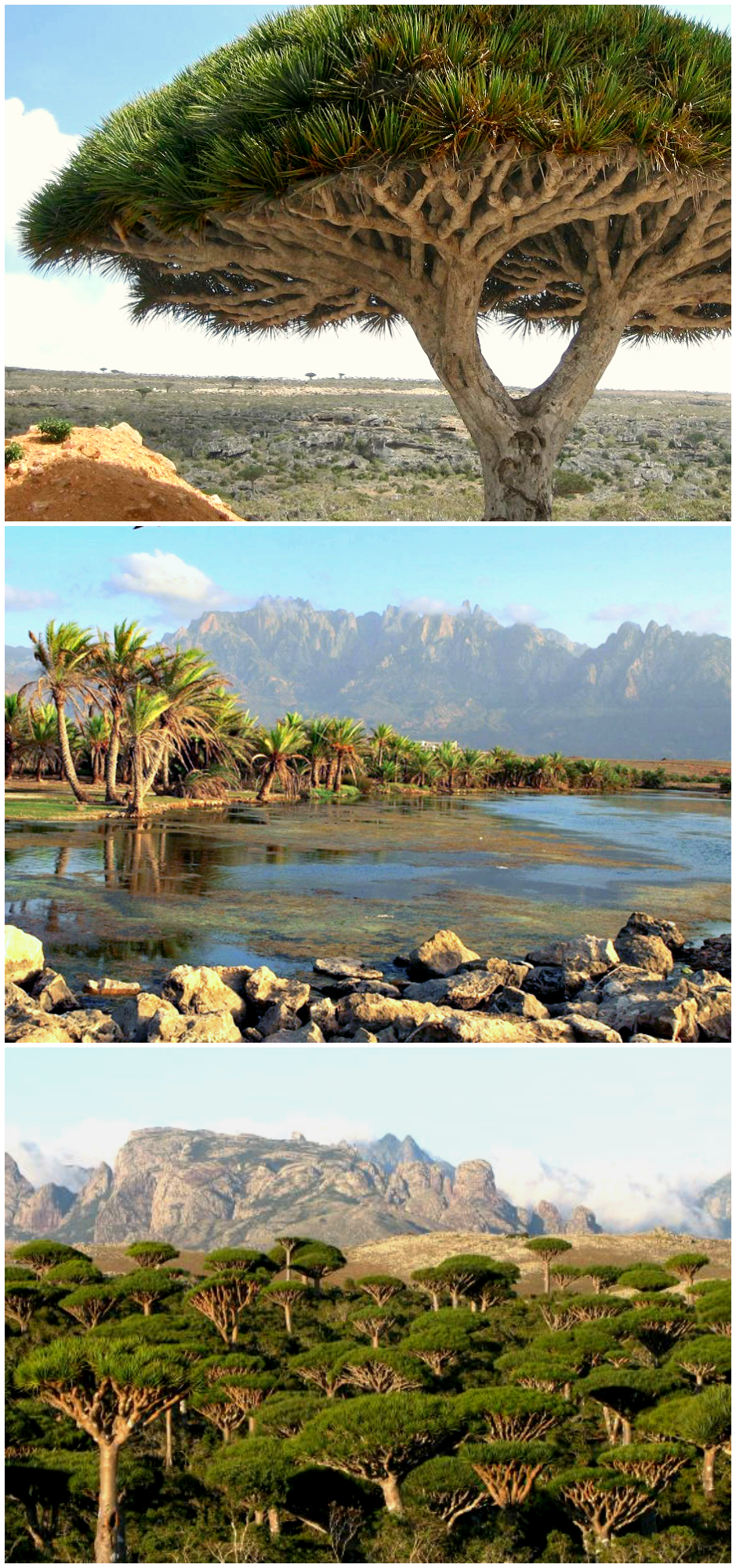 socotra collage.png